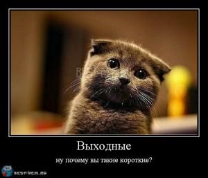 Применять мазь Вишневского лучше по выходным